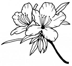 さつき 花